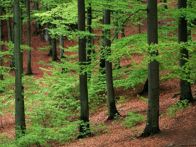 Denna bild har ett alt-attribut som är tomt. Dess filnamn är animal-djurens-rc3a4tt-till-naturen-birgitta-andlig-inspiration.jpg