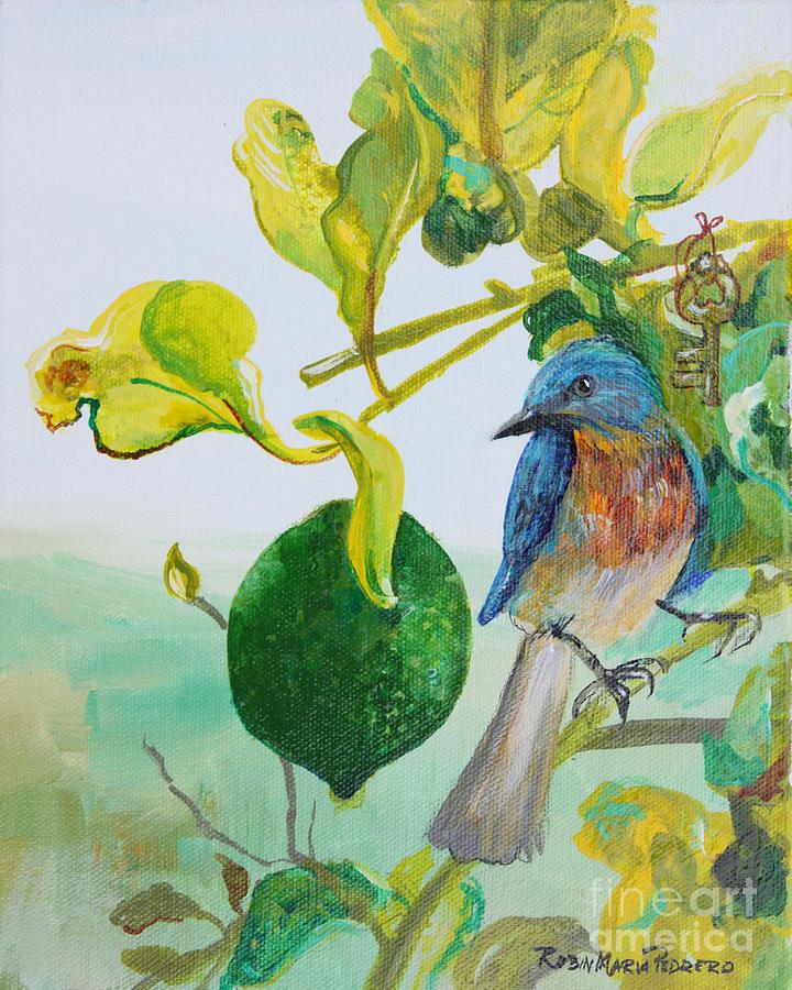 bird-key-lime-robin-maria-pedrero