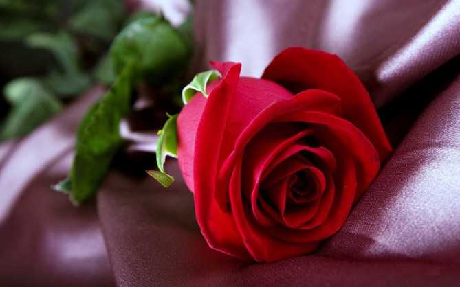 leaf-1080p-lovely-love-flower-wallpaper-hd-beautiful-flower-wallpapers-rose-red-romance-life-organic-life-flower-emotions-3840x2400